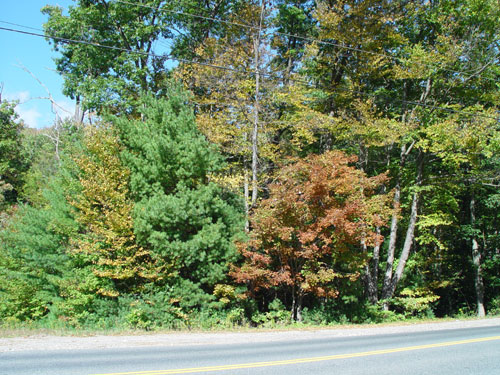 Massachusetts Foliage Photo