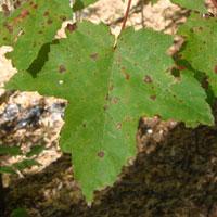 Sutton Foliage