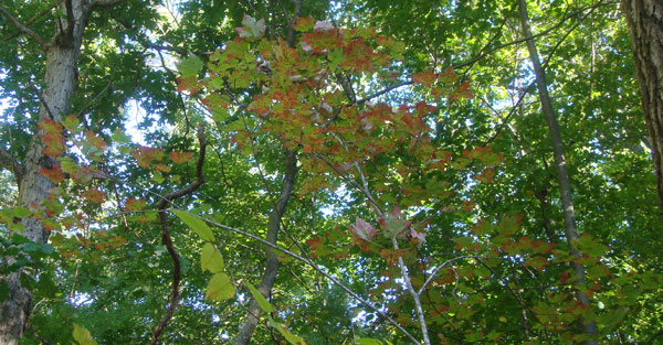 Massachusetts foliage